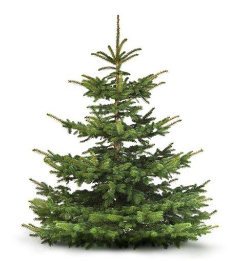 weihnachtsbaum tanne fototapete tannenbaum tanne weihnachtsbaum pixers de