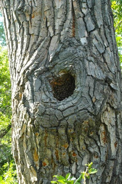 what type of tree lasts the 21 best images about types of bee hives on a