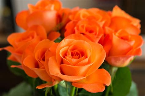 Bright Kitchen Color Ideas types of roses pictures presenting a variety of colors