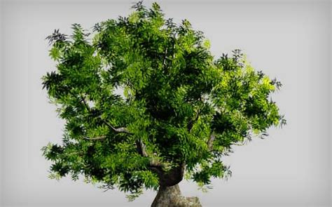 tree realistic the ultimate collection of 3d tutorials smashing