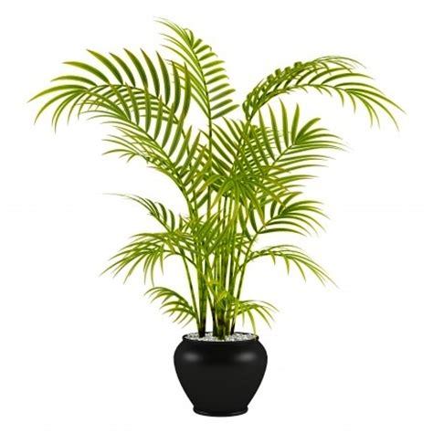 indoor palm best indoor palm trees