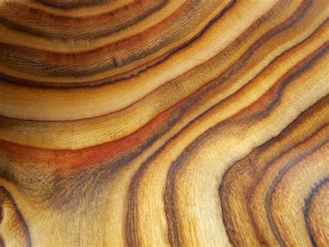 where to find wood for woodworking staghorn sumac wood grain beautifulcataya flickr