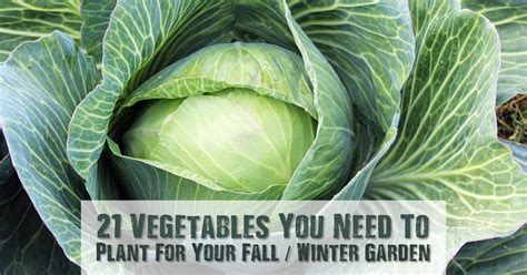 winter vegetable garden plants 21 vegetables you need to plant for your fall winter