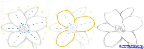 flowers step by step how to draw a realistic flower step by step realistic