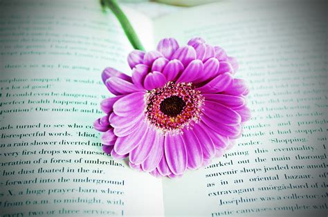 flower picture book flower on the book free stock photo domain pictures