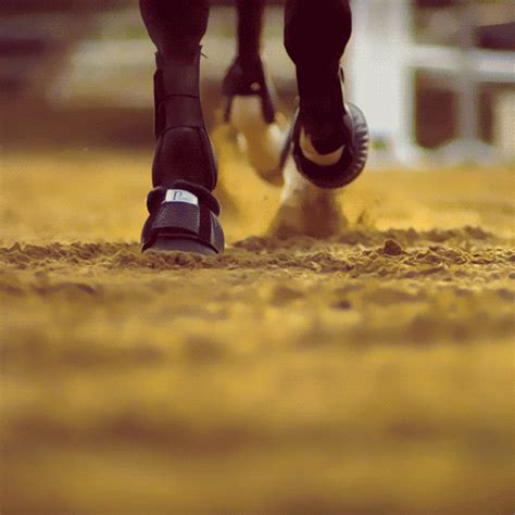 equestrian gifts gif on