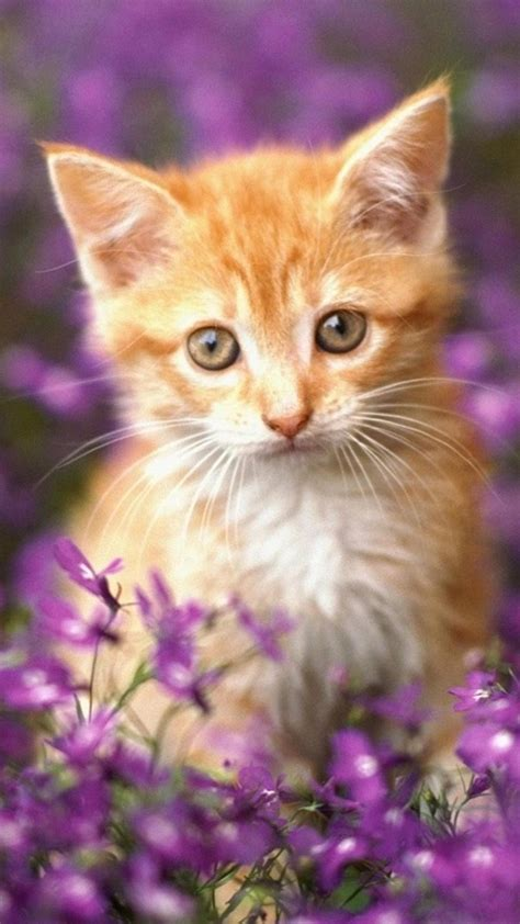 Cat Wallpaper by Galaxy Cat Wallpaper 69 Images