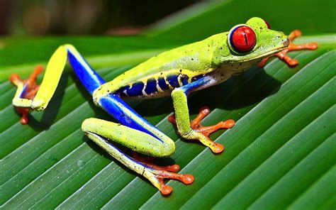 find the gift how to find a unique eyed tree frog gift