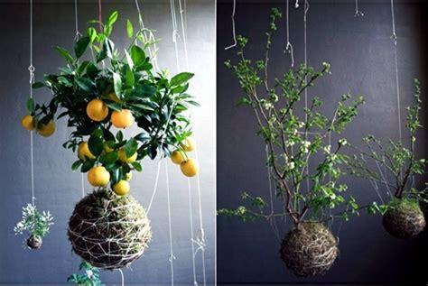 indoor hanging garden ideas 20 ideas for hanging flower pots indoor plants exhibit