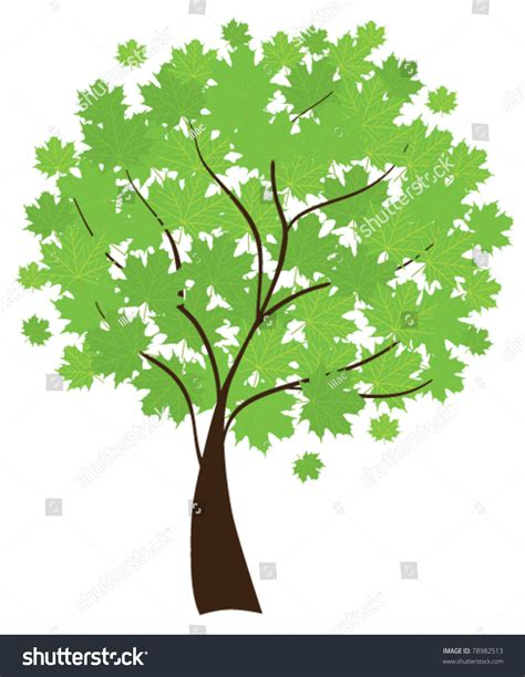 vector maple tree with green leaves 78982513