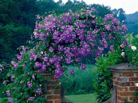 garden flower types garden flowers types unique guide to climbing