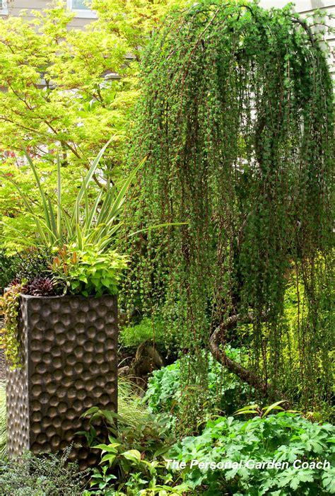 flowering trees for small gardens flowering trees for small gardens small ornamental trees