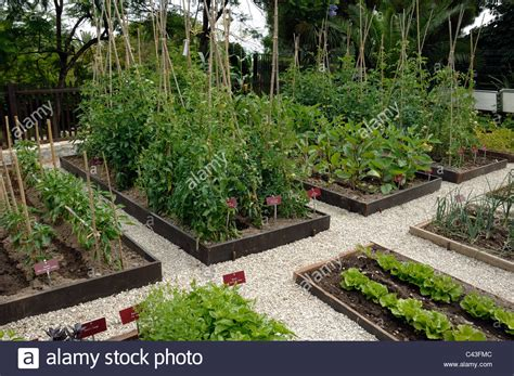 kitchen vegetable garden vegetable garden potager or kitchen garden with tomato
