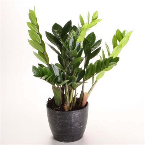 the best indoor plants indoor plants low light hgtv
