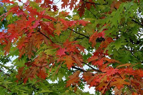 Der Garten Im Oktober der garten im oktober garten wissen