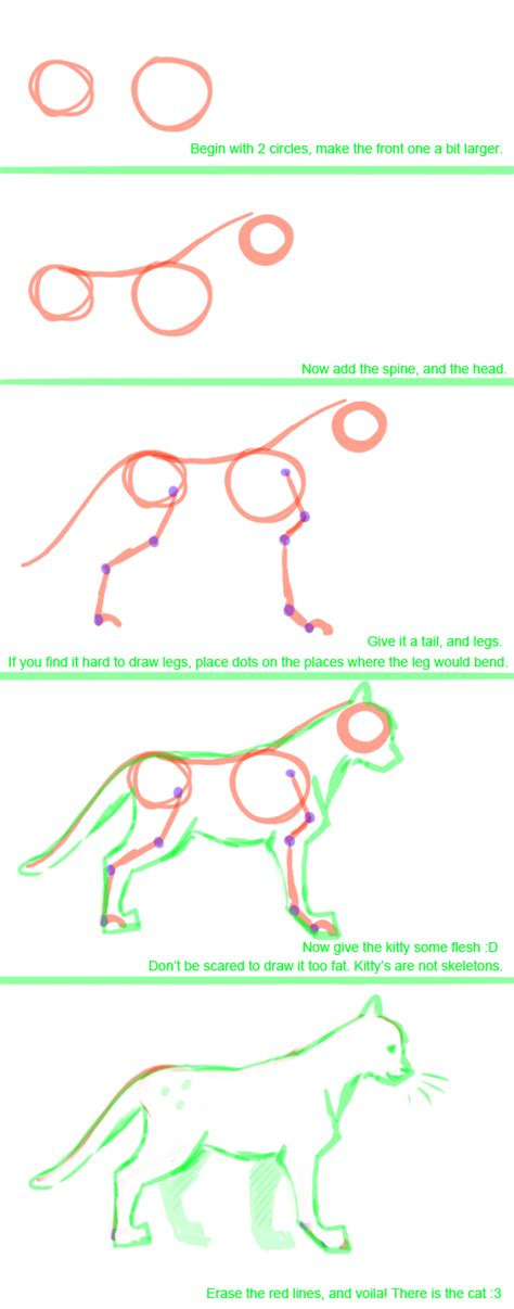 cat tutorial cat anatomy tutorial by lisannexx on deviantart
