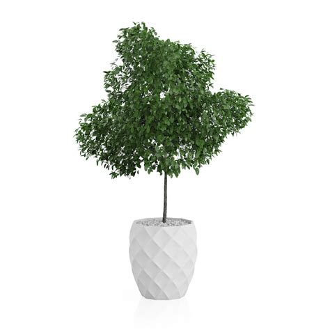 potted tree potted tree 3d model
