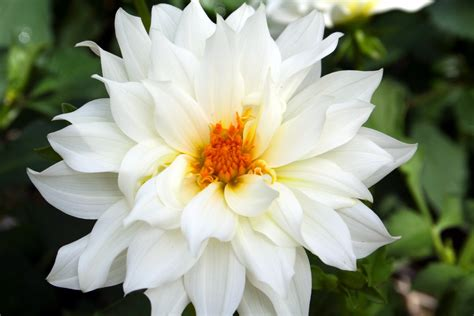 beautiful flowers names and pictures 30 flower pictures and names list