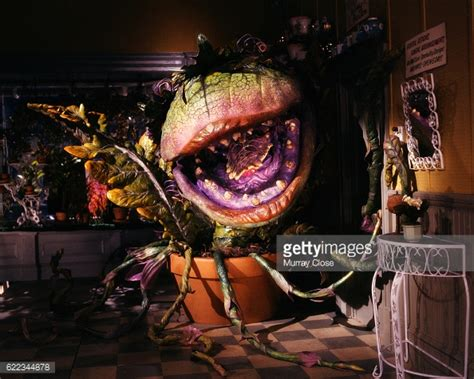 shop of horrors shop of horrors stock photos and pictures getty