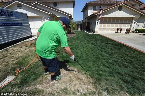 spray painting grass green the not so emerald city now californians are spray