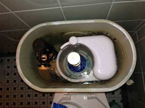 Toilet Tank Questions by Plumbing What Kind Of Toilet Tank Is This Home