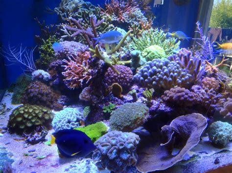recifal ciel mes coraux n 233 crosent les nuisibles