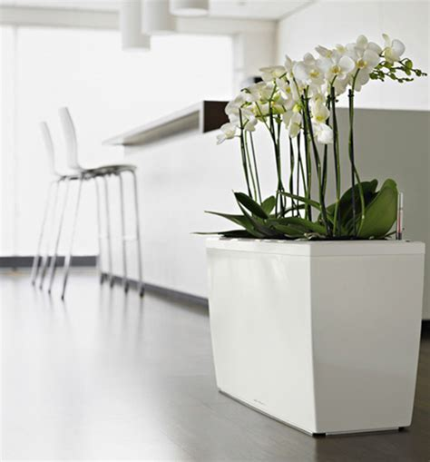 modern plants indoor lechuza sub irrigation planters with modern design digsdigs