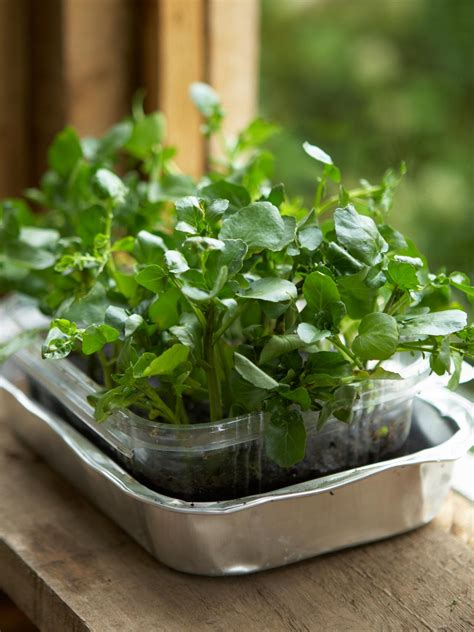 Easy Kitchen Remodel Ideas how to grow a watercress container garden hgtv