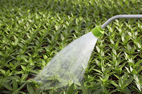 water for plants tips for watering your garden and indoor plants
