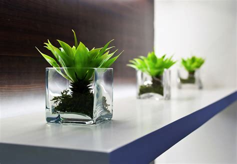 plants for the office 8 benefits of plants in the office