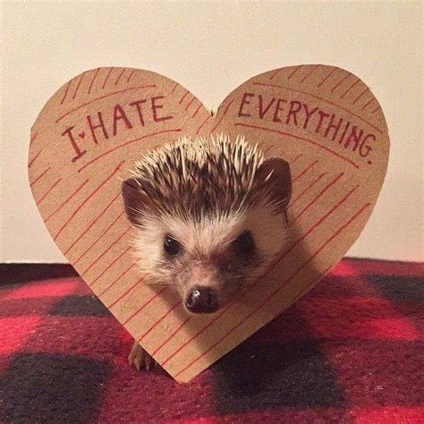 hedgehog picture book bookish hedgehogs of instagram