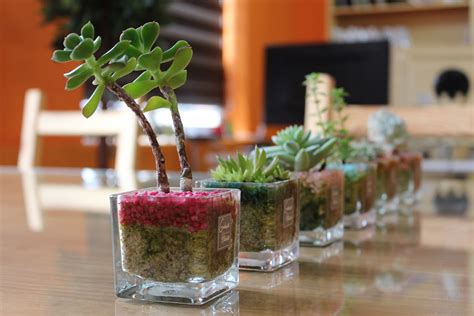 mini potted plants free photo potted plant mini potted flowers free
