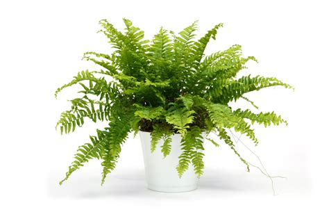 15 indoor air purifying plants for your apartment or home