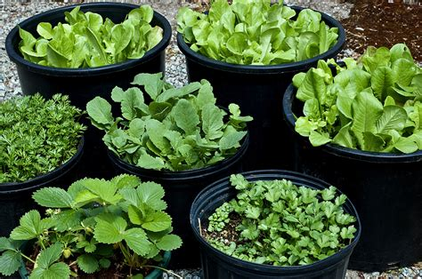 container gardens vegetables pot and container sizes for growing vegetable crops