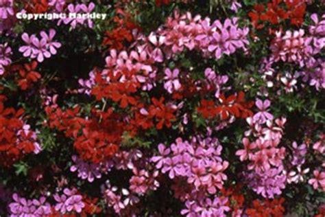 Garten Landschaftsbau Ausbildung Verkürzen by Balkonblumen Entspitzen