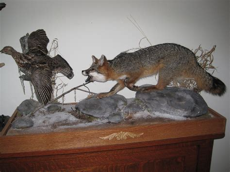 one fox small mounts memories taxidermy