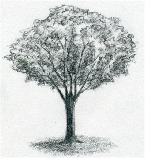 tree drawing draw a tree simply and easily