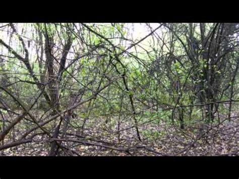 Der Unheimliche Garten der unheimliche garten in den lenne auen teil 2
