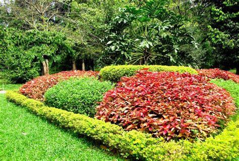ta botanical gardens ta botanic gardens trail kenny chen