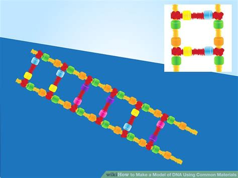 dna model using pipe cleaners and 3 ways to make a model of dna using common materials wikihow