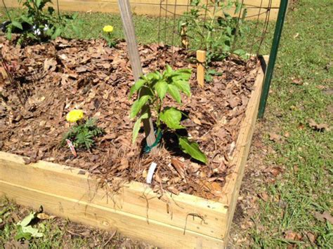 chic weed control in vegetable garden weed control in your