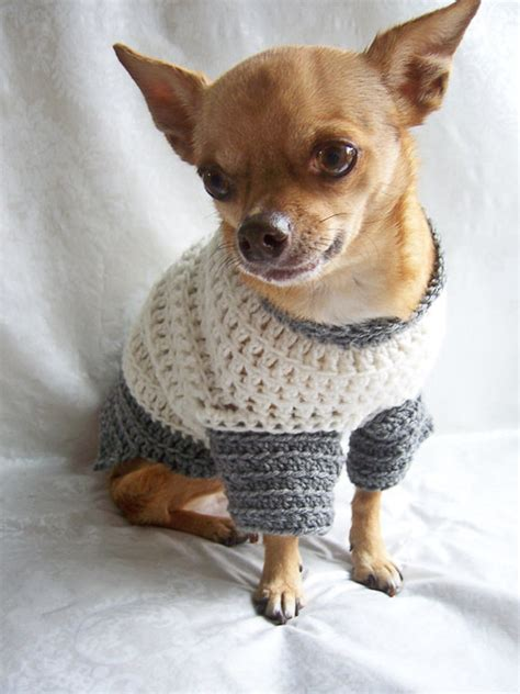 knitting pattern for chihuahua jumper chihuahua sweater crochet pattern gray cardigan sweater