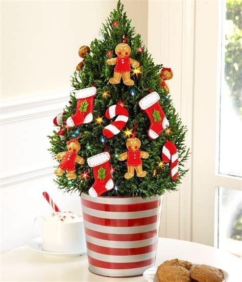 weihnachtsbaum pflege weihnachtsbaum im topf pflege weihnachten 2017