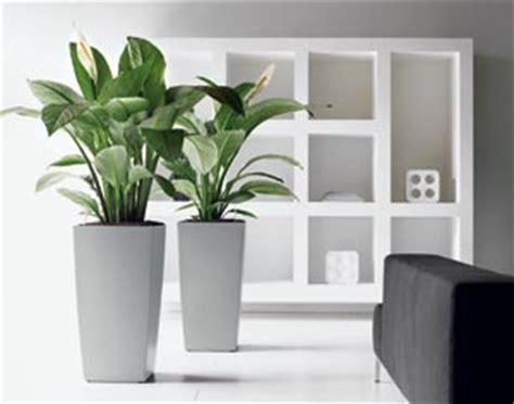 choisir ses plantes d int 233 rieur en fonction de la pi 232 ce de la maison gamm vert
