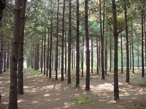 tree farm louisiana louisiana agritourism forestry lands offer tourism