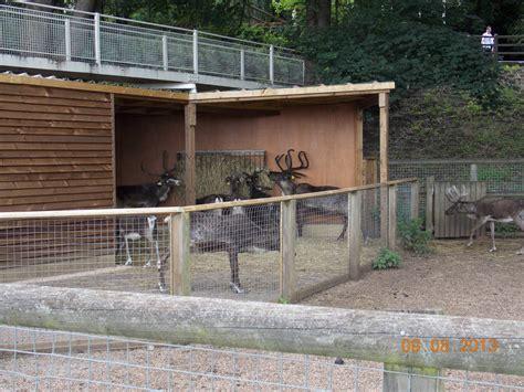reindeer stable new reindeer stable zoochat
