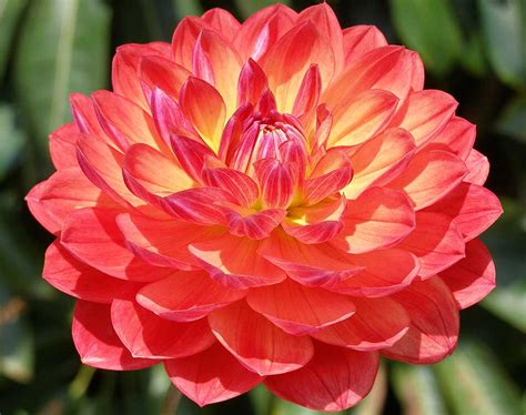 beautiful flowers names and pictures most beautiful flowers list list of top ten
