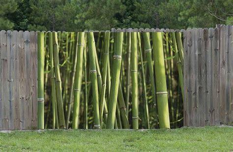 Brise Vue Bambou Brise Vue Haut Pour Jardin Prot 233 G 233 Du