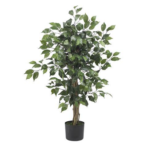 3 foot black tree 3 foot ficus tree potted 5298