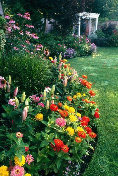 zinnia flower garden best 25 zinnias ideas on zinnia garden